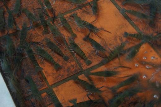 新竹餐廳推薦,新竹美食餐廳推薦,新竹推薦美食餐廳,新竹活蝦餐廳,新竹聚餐餐廳,新竹美食餐廳,新竹海鮮餐廳,新竹火鍋餐廳,新竹海產料理餐廳,新竹螃蟹活蝦餐廳,新竹餐廳推薦ptt,新竹美食推薦ptt,新竹聚餐推薦ptt,新竹聚餐,竹海鮮餐廳,海鮮泰國蝦餐廳,新竹活蝦專賣,新竹鮮蝦現煮